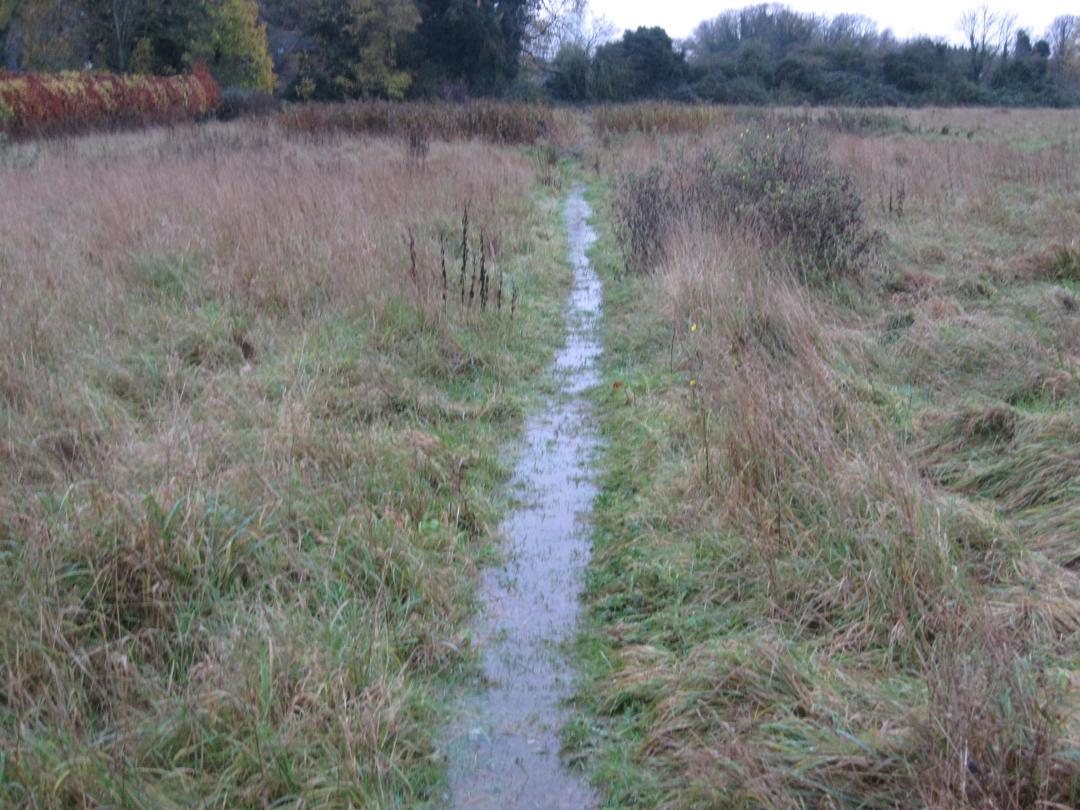 East Field - along path parallel to Poor Well