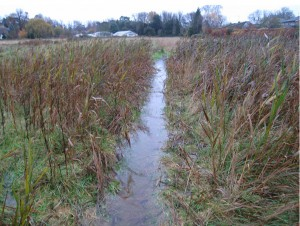 Water Meadows 3 2014-11-23